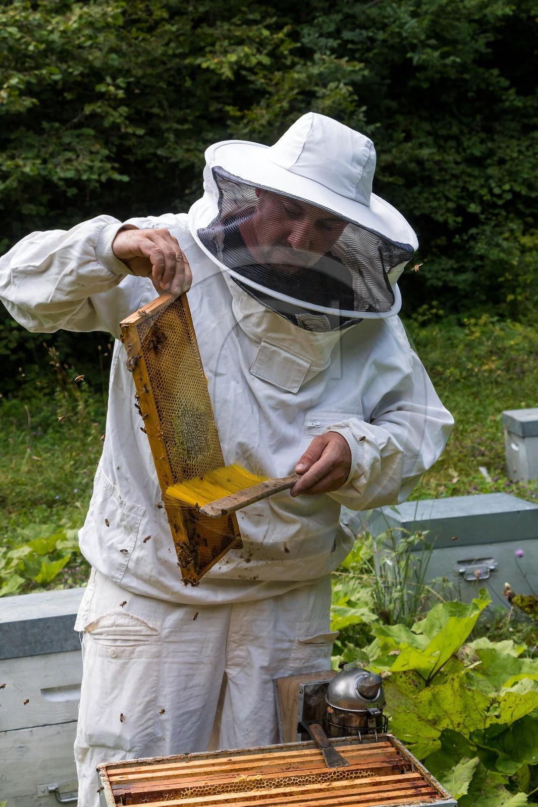apiculteur 13